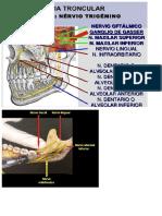 ciru reparos anatomicos.docx