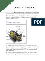 Anatomía de La Cavidad Bucal