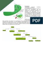 biologia plantas