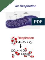 Respiration Ok
