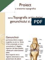 Topografia Articulațieie Genunchiului