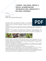 LAS AVES DE CORRAL.docx