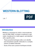 Lab. 7 Western Blotting
