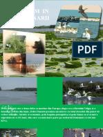 Potentialul Ecoturistic Al Deltei Dunarii