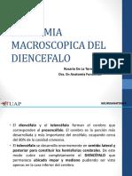 Anatomia Macroscopica Del Diencefalo 3