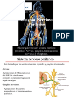 11 2 Sistema Nervioso II
