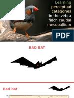 Learning Perceptual Categories in the Zebra Finch Caudal Mesopallium