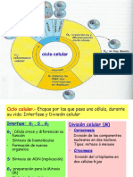 Informacion Genetica-replicacion- Ciclo Celular