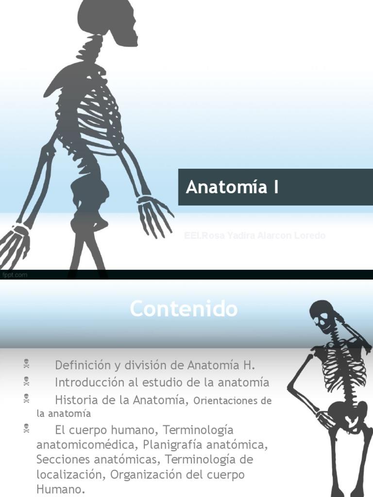 1. Anatomia