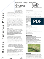 Native Grasses - Revegetatin Fact Sheet