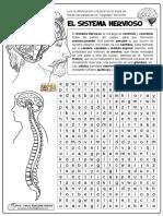 01 El Sistema Nervioso