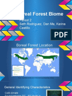 period 2 boreal forest