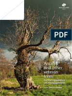 Ancient and Other Veteran Trees - Further Guidance on Management 2013