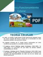 1. Estructura celular.ppt