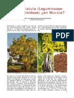 Cassia Fistula en Murcia
