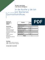 262000848-Practica-Quimiolitotrofia.docx