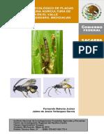 MAIZ Manejo Agroecologico de Plagas Para Una Agricultura de Conservación