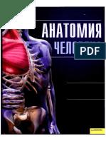 Anatomia Cheloveka Illyustrirovanny Atlas Kassan a 2011