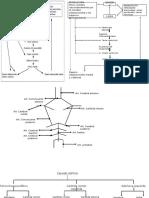 Diagrama de flujo del Liquido Encefalorraquideo