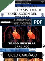 Tejido Muscular Cardíaco y Ciclo Cardíaco