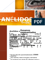 anellidos 1