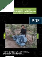 Agricultura Orgánica Biointensiva en La Cabecera Del Desierto
