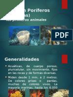 Porifera Clase