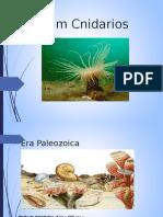 phyllum cnidarios