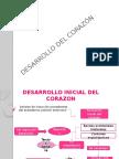 Desarrollo Inicial Del Corazon Autoguardado