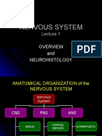 Neuro 01 Organization and Histology Student