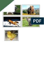 Animales Silvestres y Domésticos