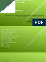 Paper Seismiki Refleksi - Rangkuman