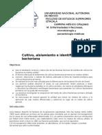 Práctica I Microbiología Cultivo, aislamiento e identificación bacteriana
