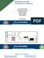 Tecnicas de Adn Electroforesis y Vectores
