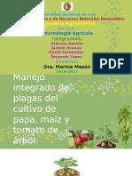 CONTROL de Plagas Papa, Maíz y Tomate de Árbol