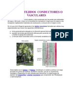 2 tejidos vasculares.pdf