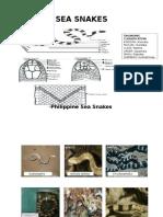 Philippine Snake Word