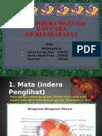 239522301 Alat Indera Manusia Ppt