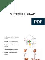 AP Urinar2013