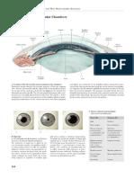 Thieme - Iris anatomy