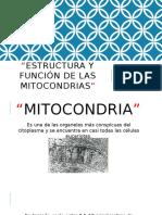 Biología Celular-Estructura y Función de La Mitocondria-2