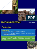 Micosis Forestal