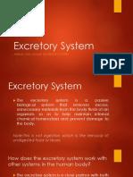 Excretory System.pdf