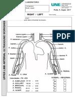 preliminar arterial completado