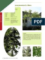 Brucea javanica (L.) Merr..pdf