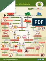 oil palm fractions derivatives web.pdf