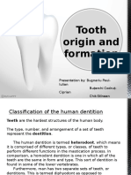 Tooth Origin and Formation - By Bugnariu Paul, Buterchi Codrut, Chit-Stinean Adonis