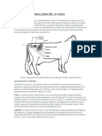 Anatomia y Fisiologia de La Vaca