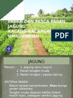 Jagung Kacang Umbi 2012