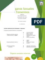 Órganos-Sexuales-Femeninos